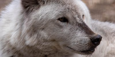 Wolf Encounters, September - December 2019