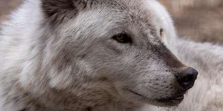 Wolf Encounters, September - December 2019 tickets