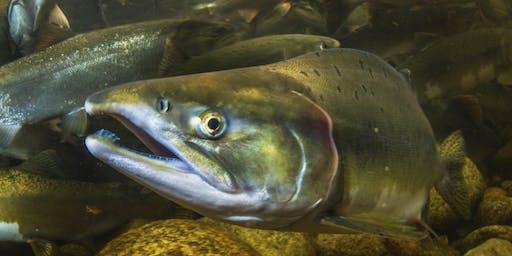 Stream & Shore: Impacting North Vancouver's Salmon