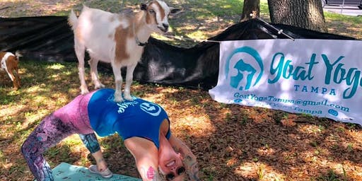 Goat Yoga Tampa plus free drink! 8/24 @ Bullfrog Creek Brewing; Valrico