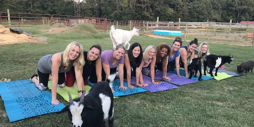 Sangrias, Sunsets, & Goat Yoga: August  30th