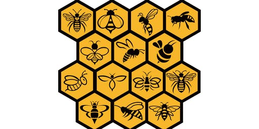 Basic Introduction To Beekeeping - What you need to know before you start.