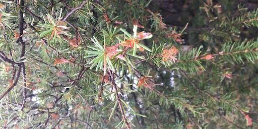 Land Stewardship Series - Forest Pests