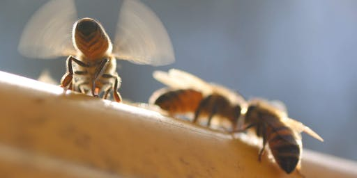 Honey Bee Colony Building and  Swarm Control Workshop