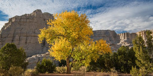 Falling for New Mexico Photo Workshop