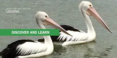 Birds of Bribie Island - Bribie Island Library