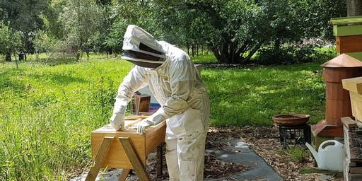 Practical Bee Hive Management