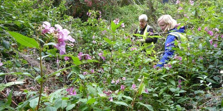 Himalayan balsam pulling task day, Perth tickets