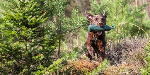 """Der """"bewegte"""" Hund - Outdoor Portrait- und Actionfotografie"""