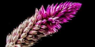 Wildflower Gardening (Tarleton)