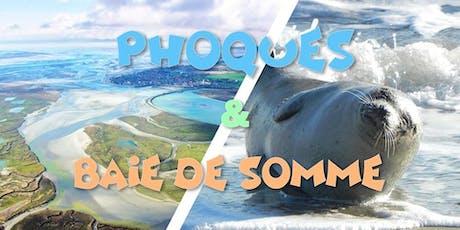 Découverte des Phoques sauvages & Baie de Somme tickets
