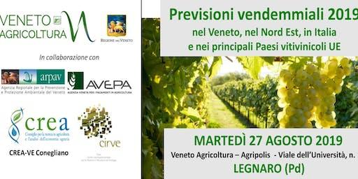 Previsioni vendemmiali 2019  nel Veneto, nel Nord Est, in Italia  e nei principali Paesi vitivinicoli UE