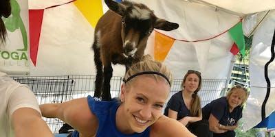 Goat Yoga Nashville- Amazing August