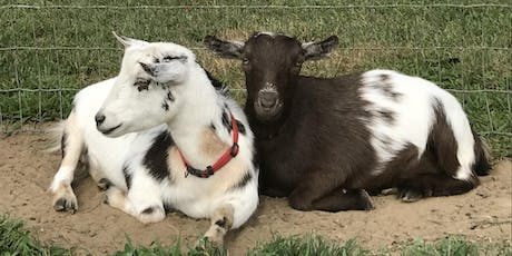 Goat Yoga at Mount Hope Farm Barn Thursday, August 29 at 5:45 pm tickets
