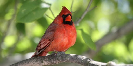 Fall 2019 QBG Bird Walks with NYC Audubon