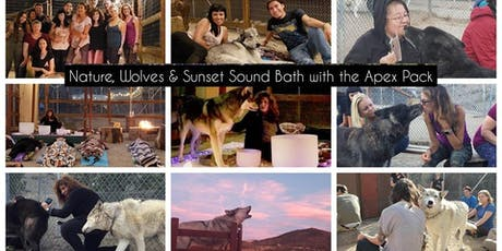 Immerse Yourself in Nature with Wolf Energy & Sound Healing tickets