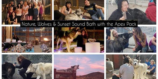 Immerse Yourself in Nature with Wolf Energy & Sound Healing