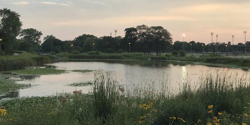 Humboldt Park Bird Walks