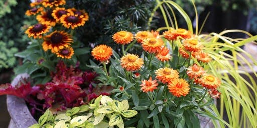 Fall Container Combinations - CH