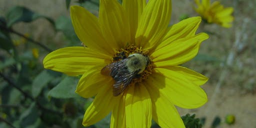 Pollinator Conservation Short Course for Small Farms