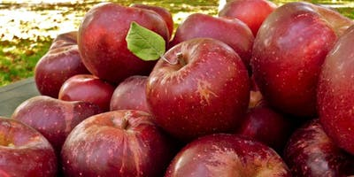 Fall Apple Festival