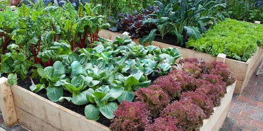 Fall Vegetable Gardening Class