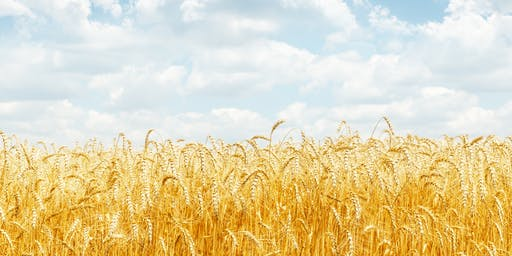 Technology Solutions for the Food & Agricultural Industries