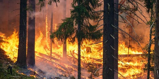 Hot Topics: Living with Wildfires - Panel Discussion FREE