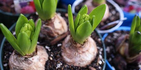 Fall Bulbs: Selection, Planting & Care Tips - CH tickets