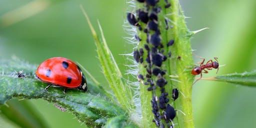 Organic Pest, Disease, & Weed Control