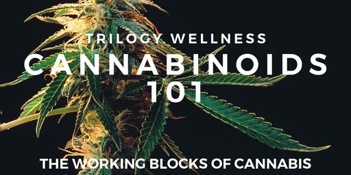 Cannabinoids 101 August Workshop