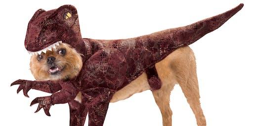 Burlington's Not-So-Scary Pet Costume Contest