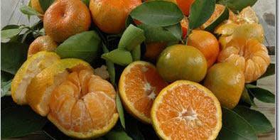Fall & Winter Fruit Program