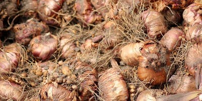Bulbs for the Southern Garden