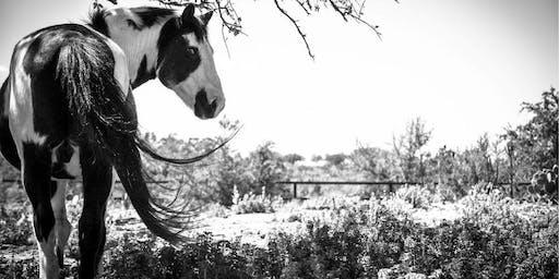"""Habitat for Horses """"Barnraiser"""""""