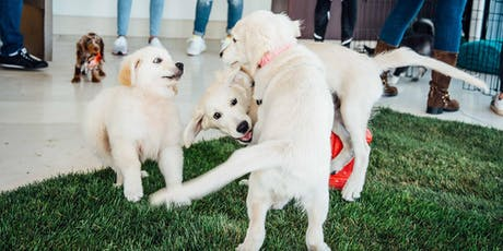 Tully's Puppy Preschool (Studio City) tickets