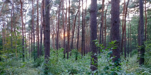 Douche de forêt