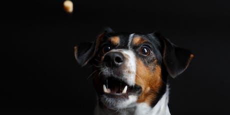 Hund Katze Maus - Zu Gast beim Tierschutzverein München Tickets