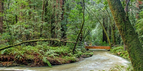 Muir Woods (Redwood trees) and Sausalito Tour (Optional return on Ferry) tickets