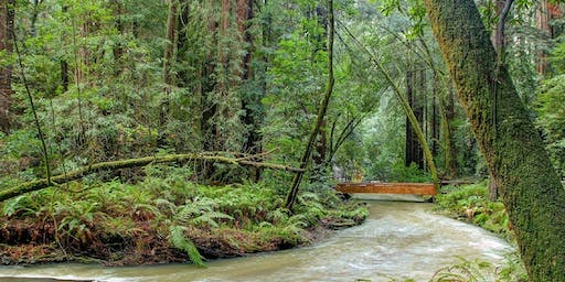Muir Woods (Redwood trees) and Sausalito Tour (Optional return on Ferry)