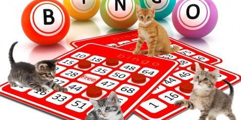 YOUR Humane Society SPCA Presents KITTY BINGO