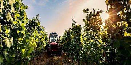 Sip & Savor: Viticulture 101 Wine Class tickets