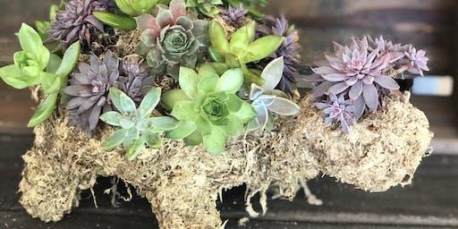 Succulent Turtle Workshop