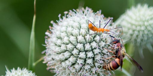 Friend or Foe: Insects in the Garden