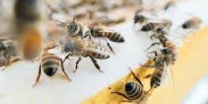 Natural Bee Keeper