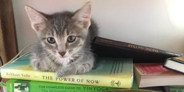 CLAWS Kitten Yoga