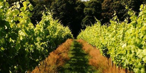 The Vineyard Feast 7/9/19