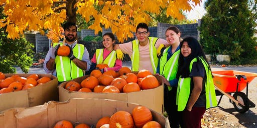 Pumpkin Patch Event Day Volunteering