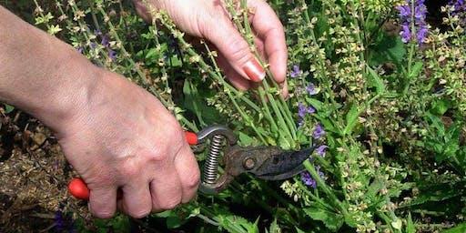 Garden Maintenance Workshop: How to Keep Your Water-Wise Garden Thriving