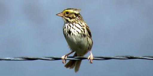 Prairie-nesting birds at Powell Butte: Science Talk